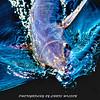 Kingfish HDR 003