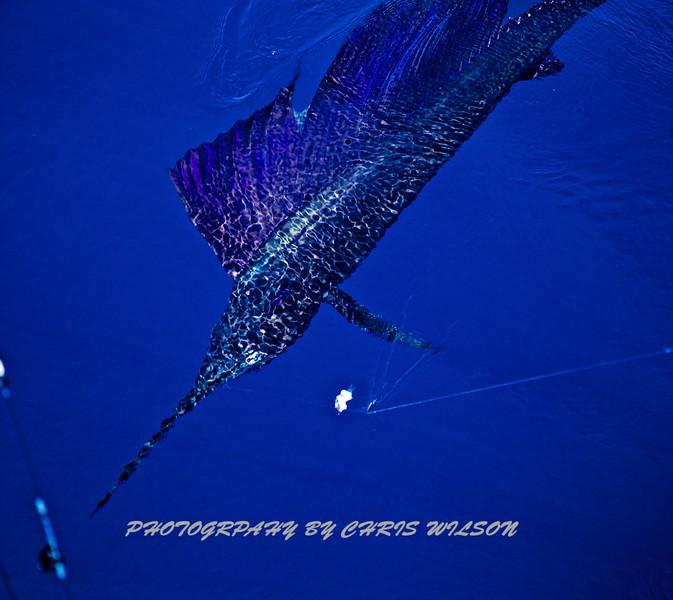 CR Sailfish HDR 2