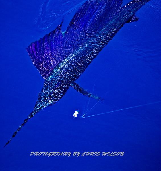 CR Sailfish HDR 1