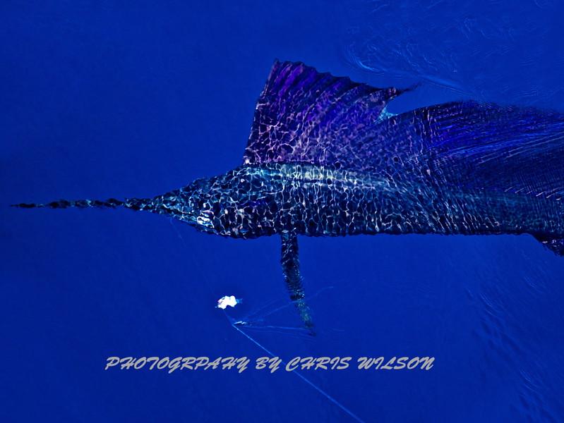 CR Sailfish HDR 2 _30X40