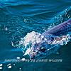 Kingfish HDR 002