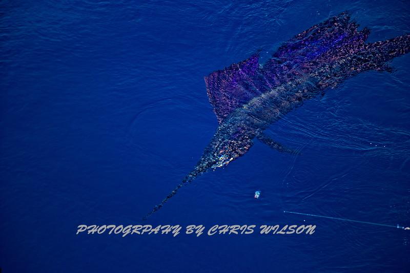 CR sailfish HDR 3