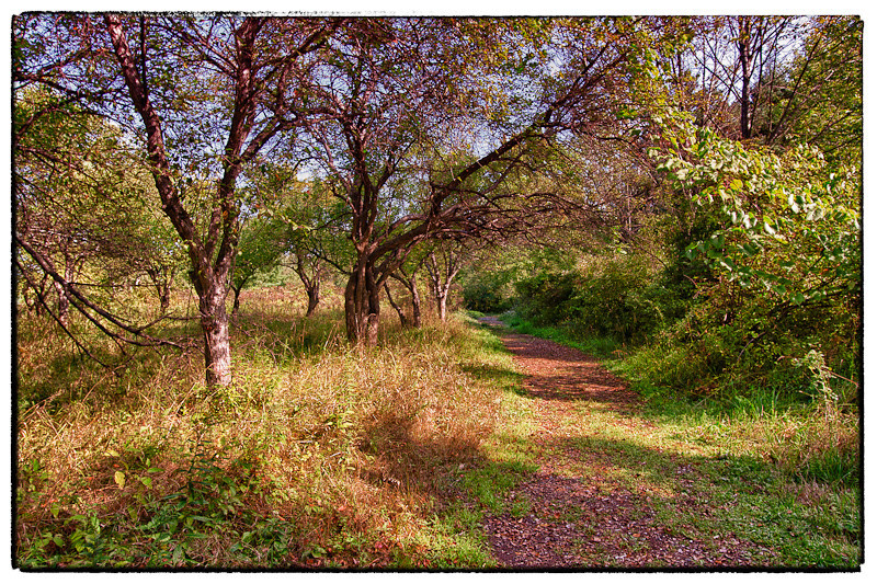 A vibrant view of the Wild Turkey Trail