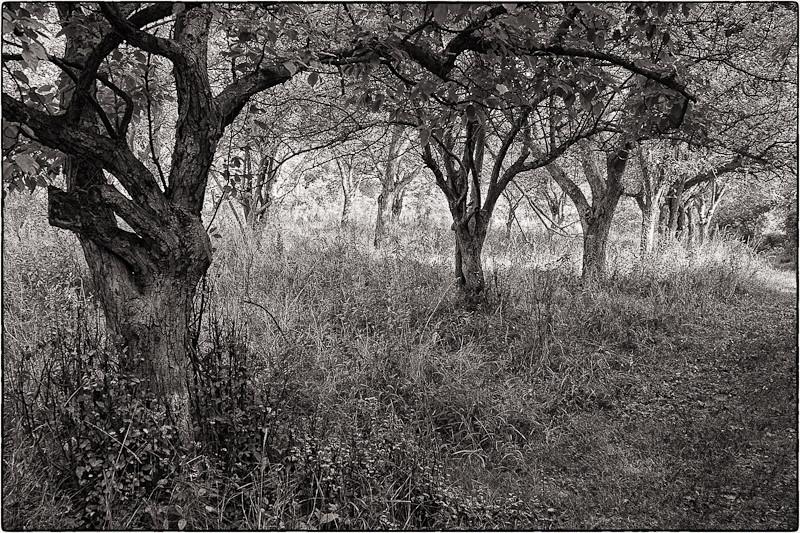 On the Wild Turkey Trail