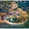 An impressionist view of the Wild Turkey Trail