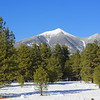 The San Francisco peaks from Flagstaff