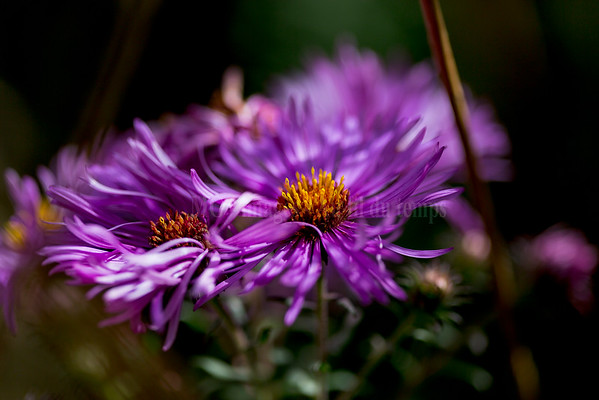 Fleurs # 1