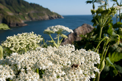 BeeForeground & Oregon Coast