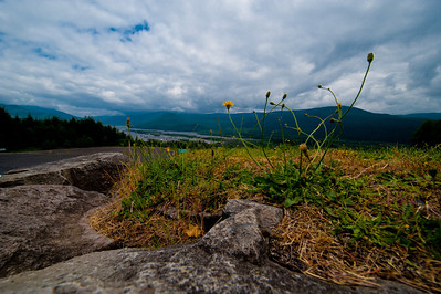 Mt. St. Helen's Weeds