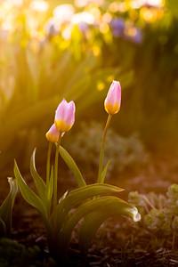 'Tis Spring Time, Finally