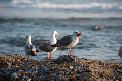 ThreeGulls and a Sea Star (part)