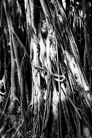 Banyan Tree Boy