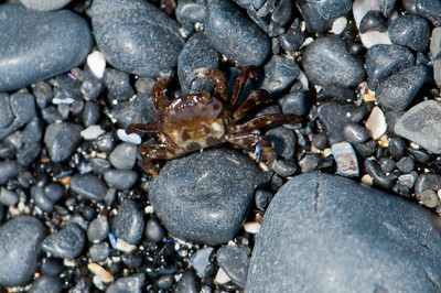 Tiny Crab on Gravel