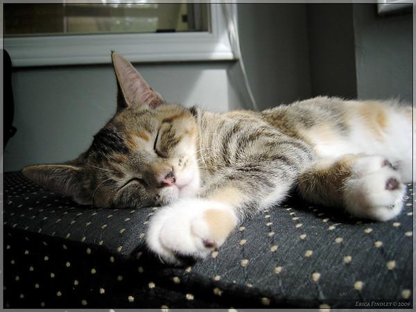 Sweet Allie sleeping