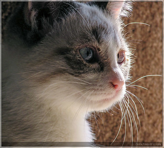 Pandy right after I first adopted her.  She still had a cold in her eyes that she caught at the shelter.  But wasn't she cute?