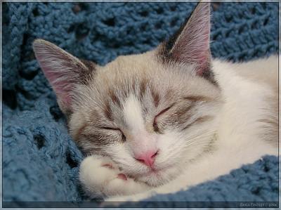 My Cat -- Pandy (short for Pandora)