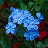 """""""Passionate Blue"""""""