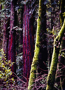 """Redwoods and Moss"""