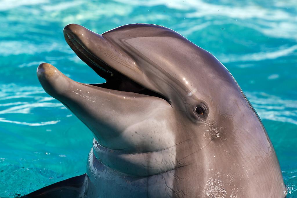 Happy Dolphin - YouTube