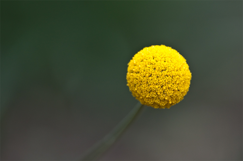 Great ball of yellow