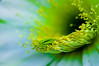 Cactus flower #2