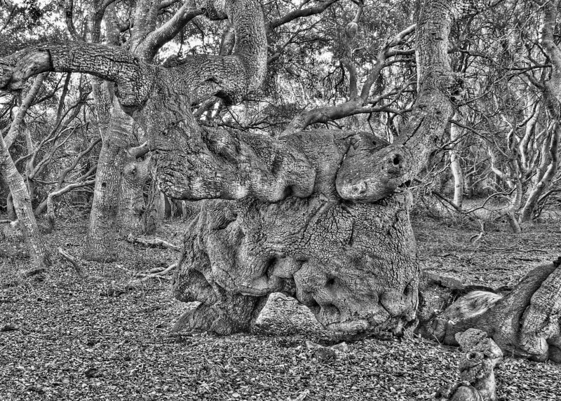 Oaks of Los Osos 02
