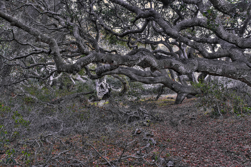 Oaks of Los Osos 01