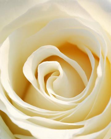 7697 White Rose