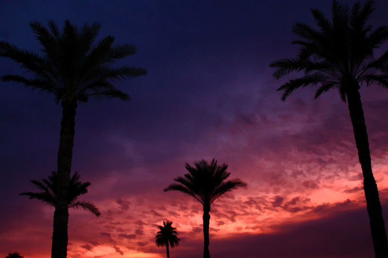 Palms against an Arizona sunrise.