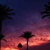 Palms against an Arizona sunrise.