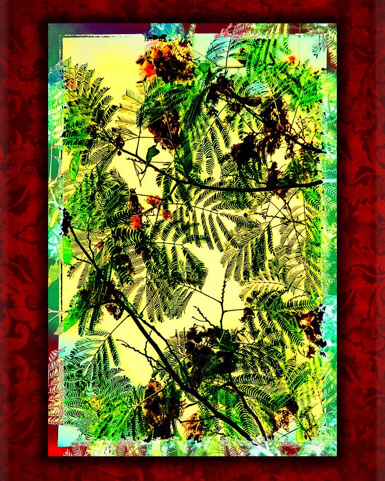 Mimosa Tree Abstaract
