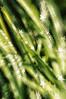 2012-06-09 DSC21983