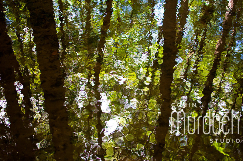 Woodland Water Abstract