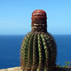 Cactus (Shirley Heights, Antigua)