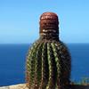 Cactus (Shirley Heights, Antigua)