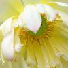Weeping flower (New Orleans, LA)