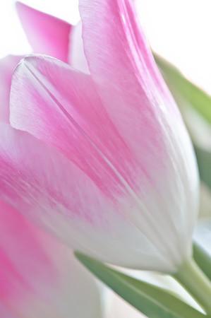 2011-03-26 DSC04671