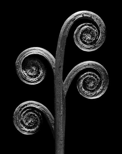 Four Spirals