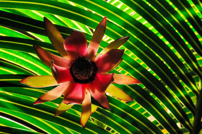 Tropical Sunburst II