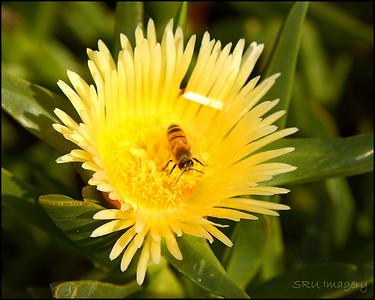 Bee a Flower