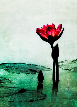 Waterlily Spirit