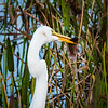 Egret with meal