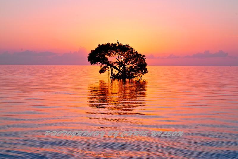 Florida Keys_07-26-12_0221