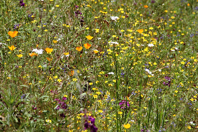 Yosemite, Flower Hike