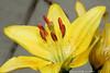 YellowFlower2Side