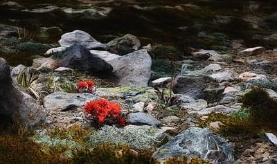 Mount Rainier Nationa Park