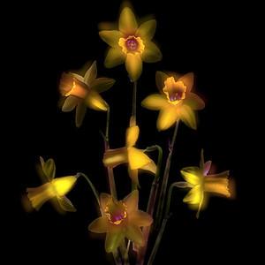 Dream of Daffodils
