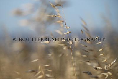 Wild grass closeup