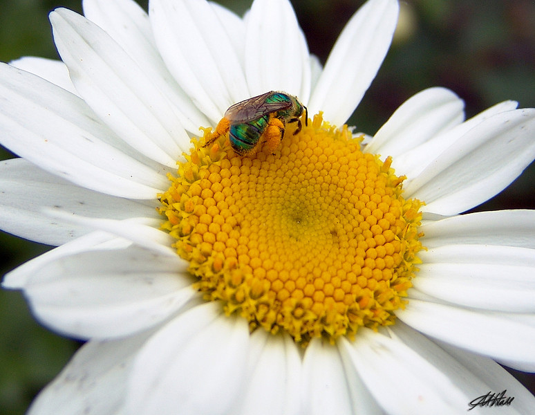 """""""Loaded With Pollen"""""""