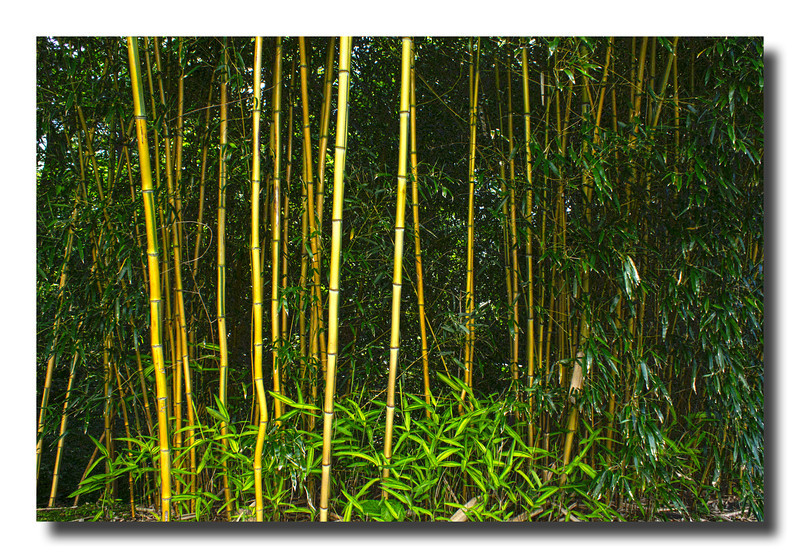 """The Bamboo Jungle"""